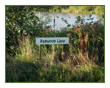 redwood lake - home to some the largest carp in yorkshire